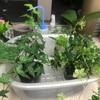 テレワーク中の植物たちが気になるから出社した!