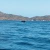 クジラの踊る音
