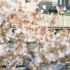 サクラ満開の東京を撮る2018。2日目後編(新宿→五反田)【2018.3.25】