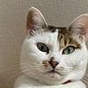 【臆病な猫】日々の生活と私の体験談⑫!