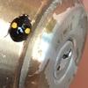 【エムPの昨日夢叶(ゆめかな)】第1199回『幸せを呼ぶてんとう虫と出会った日!代々木上原駅恒例「頭上に注意」がはじまった夢叶なのだ!?』[5月31日]