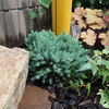 狭いカーポート脇の花壇に選んだ植物