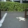 ベンチの猫