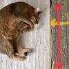 段ボールで猫の爪とぎを手作りしました。お昼寝枕としても最適?