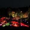 夜の六甲高山植物園
