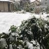埼玉県も初雪〜交通機関にも影響