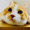 【猫学】オスは甘えん坊?猫の性別による性格と見た目の違いをまとめてみた。