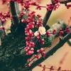 立春は春の始まりって本当?正月との違いを解説!