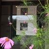 弘前で、初女さんと。