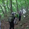夏の奥多摩・浅間嶺の尾根と緑の森歩き