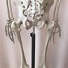 体の根本である骨を調整することの大切さ。