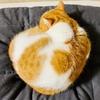 寒い季節に丸まる愛猫の寝姿は、まるで焼きたてのもちもちベーグル。