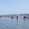 大洗サンビーチに潮干狩りに行ってきました!