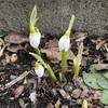 少しずつ春。