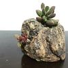 岩陶鉢 X ロゲルシー、桜吹雪