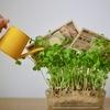 【株式投資レビュー】2019年の投資報告!国内個別株、外国ETF、投資信託それぞれの結果を公開