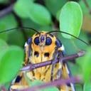 dk-moth「蛾フォルダ」
