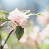 ある春の日の散歩③