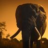 アフリカに在住していた僕が選び抜いた、死ぬまでに行くべきアフリカサファリ3選