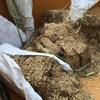 バガスとなっとく有機で自家製堆肥づくり
