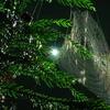 蜘蛛の巣と雫