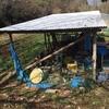 菊池農場:越冬小松菜の出荷