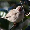 『キャンベルタウン野鳥の森』の小鳥