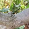 【自宅保育中】小さなカエルから食物連鎖を学ぶ【ホームスクーリング】