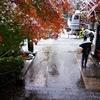 雪紅葉 Ⅰ