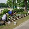 緑化作業 PTA環境・緑化