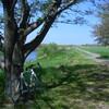 新緑の荒川サイクリング(その2)