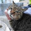 3月前半の #ねこ #cat #猫 その4