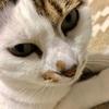 【臆病な猫】日々の生活と私の体験談②!!