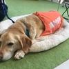 日本盲導犬協会のイベントに参加してみた