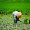 退職後に農業したいってよく聞くから、元兼業農家の息子が農業を始めるのに必要な費用を計算