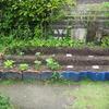 【家庭菜園】バジルと大粒枝豆の種を蒔きました