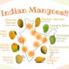 【インドの果物】マンゴーの季節がやってきた!マンゴー大国インドでマンゴーを味わい尽くす ~マンゴーの歴史・インドマンゴーの種類・食べ方・栄養素など~