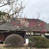 「マダム倶楽部」活動報告 梅と桜とバレンタイン♪ 2月18日