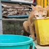 暑いニャア…。だがしかし猫は賢かった。