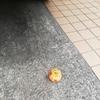秋の味覚 柿