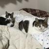 東京大学は猫同士の新型コロナ感染を確認も、猫から人に感染した例は無い。未だに猫を危険視する人に欠けている能力とは?