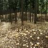 美杉の新名所・ミツマタ群生地から学能堂山に登る