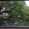 東京藝術大学とその周り -3-