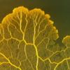 「迷路を解く」粘菌モデルの可能性