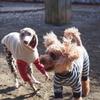 9歳は准シニア犬