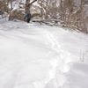 小寒の奥物部の森 冬晴
