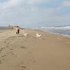 犬と、犬吠埼&九十九里の海岸