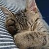 今度は子猫が膀胱炎になりました