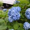 5月は穴場?鎌倉・長谷寺の青もみじと咲き始めのあじさい鑑賞