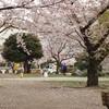 桜も後半戦…